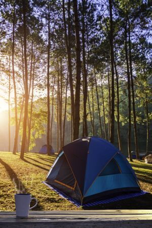 dome of the rock: Cup of coffee in tent with forest sunrise view