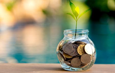 Spaargeld munt vol met glas piggy. Plant groeit in spaarmunten. Investeringsconcept Stockfoto