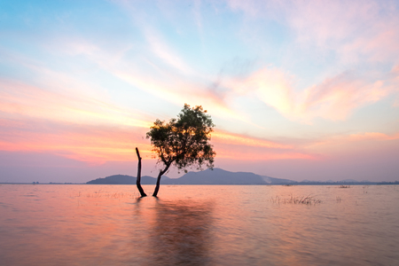 cumbria: Alone alive tree is in the flood water of lake at sunset scenery in reservoirs, overflowing Stock Photo