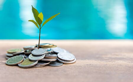 Plant Growing In Savings Coins. Investment  Concept Stock Photo