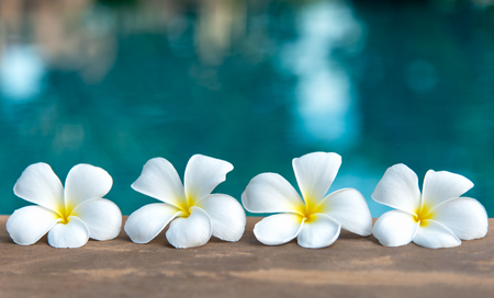 Tropical frangipani white flower near the swimming pool, flower spa. Copy space. Stock Photo