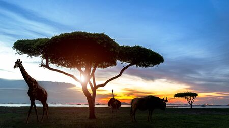 South africa of Silhouette African night safari scene with wildlife animals on the panorama rhino nature
