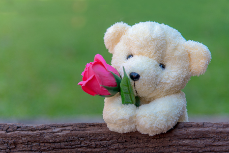 Cute teddy bear clutching a red rose in its arms on wooden background, copy space.  Valentine Concept Stock Photo