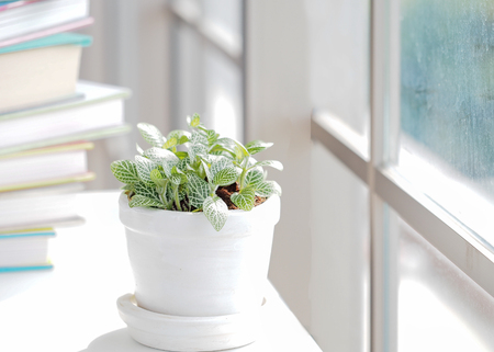 Green plant and book for relax near white window of spring time and sunny day.  Lifestyle Concept