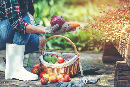 Female farmer holding a basket of vegetables organic in the vineyard outdoors countryside for sell in the markets Stock Photo
