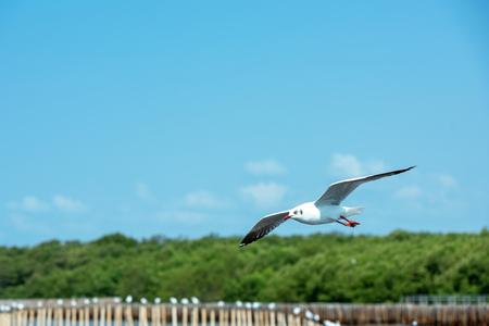 Seagull flying on the sky Banco de Imagens - 120819393