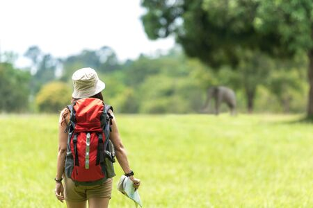 Women hiker or traveler with backpack adventure holding map to find directions and see elephant in the jungle forest outdoor for education nature on vacation. Travel and Lifestyle Concept Banco de Imagens