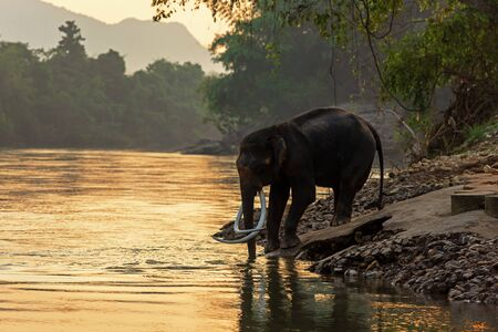 Asian wild Elephants walking in the natural river at deep forest at Kanchanburi province in Thailand