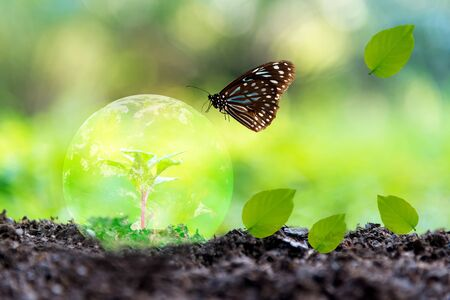 Glowing earth globe on soil with butterfly in the nature. World Environment and Save Environment. Earth image provided by Nasa. Stock fotó