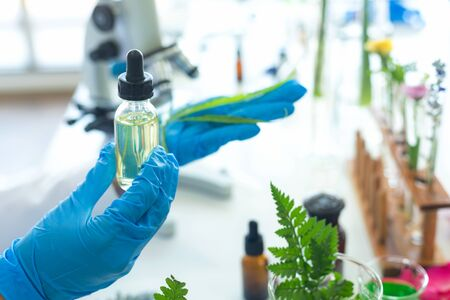 Close up hands Science lab woman research for  Marijuana Natural alternative herb  oil cannabis leaves placed alternative medicine and drug. alternative medicine,  pharmaceutical and therapeutic laboratory.  Natural herb Concept