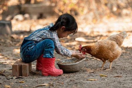 Asian little girl and young woman feed the chicken in layer and house farm eggs.  People kid woking outdoor stay home. Stock Photo