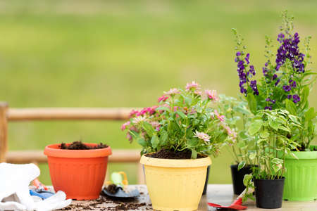 Gardening a shovel filled with soil and flowers potted tool in the garden summer spring time, copy space. Lifestyle Concept