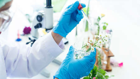 Close up hands woman science lab research for Natural alternative herb and essential oil from fresh flower new product skin care with microscope in laboratory.  Healthy herb Concept Stok Fotoğraf