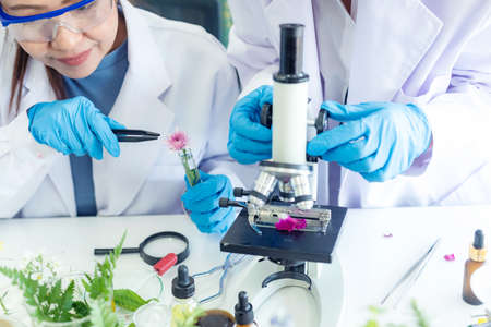 Asian Woman and team science lab research for Natural alternative herb and essential oil from fresh flower new product skin care with microscope.  Healthy  Laboratory Stok Fotoğraf