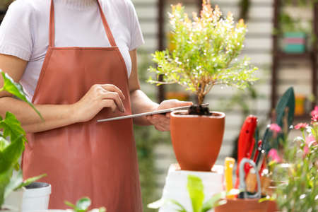 select focus. Close up hands  woman receipt order customer and sale plant flower online on laptop in garden. People hobby and freelance gardening indoor at home, nature garden background. Happy and enjoy in spring and summer day. Lifestyle Concept