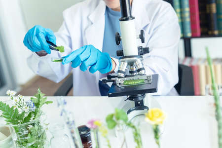 Close up hands woman science lab research for Natural alternative herb and essential oil from fresh flower new product skin care with microscope in laboratory.  Healthy herb Concept Foto de archivo