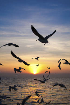 Seagulls fly above sea at dusk