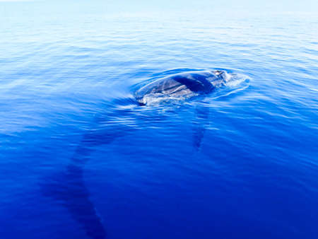 Submerged humpback whale in the deep blue ocean in australia Stock Photo - 4761572