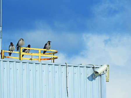 A group of crows sitting near surveillance camera Stock Photo