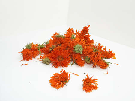 fiori d'arancio secchi di calendula. Isolato su sfondo bianco.