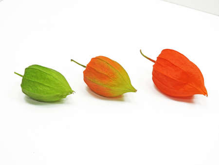 sequential: Three colorful physalis flowers showing three stages of physalis flower ripening on white background Stock Photo