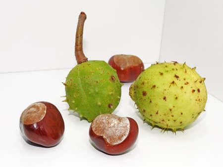 Autumn composition using ripe chestnut. Isolated on white background.