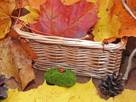 Autumn objects abstract composition on wooden background Stock Photo