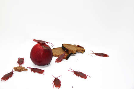 Abstract composition of poverty. Artificial cockroaches on bread. Stock Photo