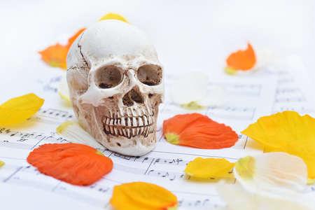 music lyrics: Music abstraction. Autumn texture with white small skull. Foto de archivo
