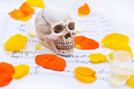 music lyrics: Abstraccion de musica Textura de otoño con blanco pequeño cráneo.