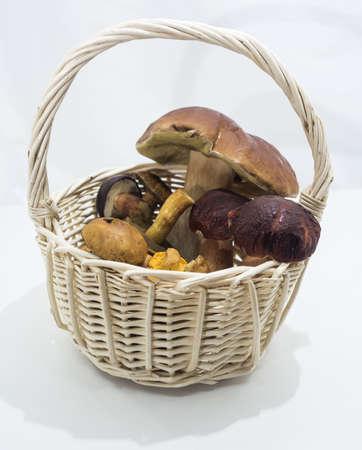 Autumn mushrooms abstract collection. Abstract macro photo.