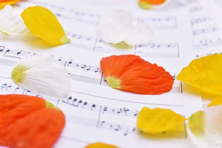 music lyrics: Abstraccion de musica Las hojas de otoño sobre papel blanco. Foto de archivo