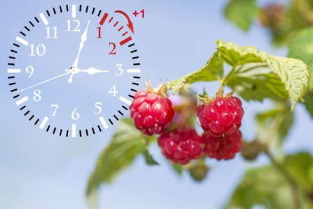 Wall Clock with flowers Stock Photo