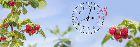 Wall Clock with flowers Stock Photo - 118475030