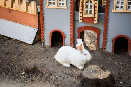 Trusisu karaliste - Rabbit Kingdom. Latvia, April of 2019. Stockfoto