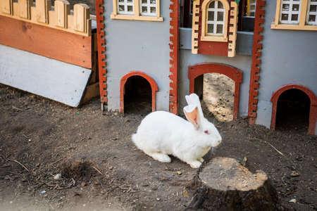 Trusisu karaliste - Rabbit Kingdom. Latvia, April of 2019. Zdjęcie Seryjne