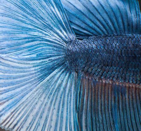 Texture of fish skin