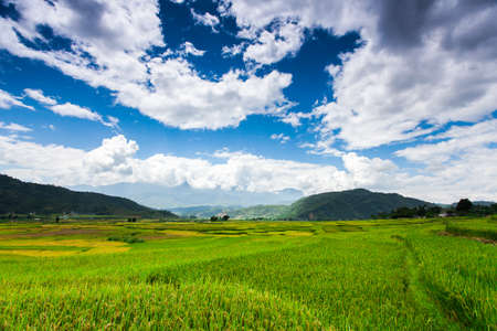 Rice fields at Northwest Vietnam