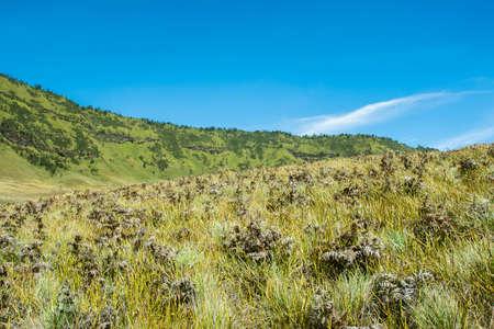 Savana Field, Bromo Tengger National Park, East Java, Indonesia