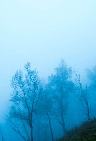 tree in a field, winter season.