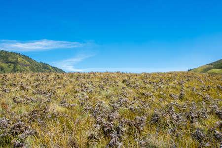 Savana Field, Bromo Tengger National Park, East Java, Indonesia Stock Photo - 87395363