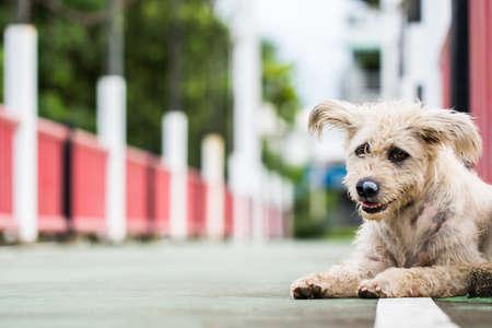 Trauriger Hund Hund wartet auf seine Geliebte