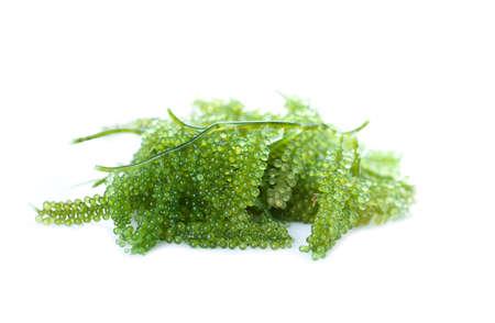 Sea grapes ( green caviar ) seaweed, Healthy food. Stock Photo