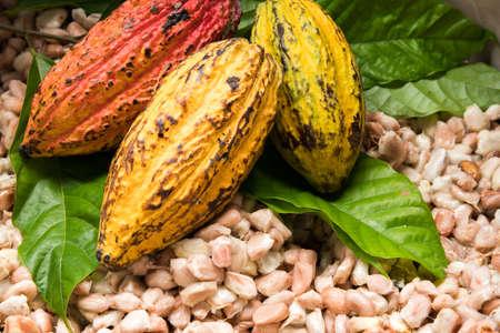코코아 콩 및 나무 표면에 코코아 콩 깍 지.