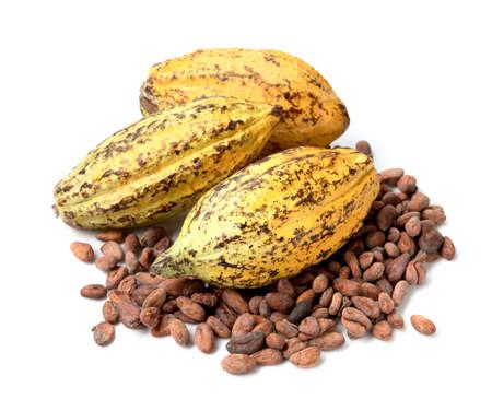 카카오 열매, 원시 카카오 콩, 흰색 배경에 코코아 포드 스톡 콘텐츠