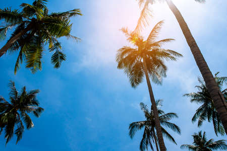 Coconut palm trees, beautiful tropical background Banco de Imagens