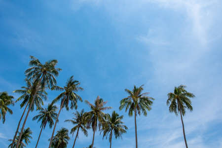 Coconut palm trees, beautiful tropical background Stock Photo