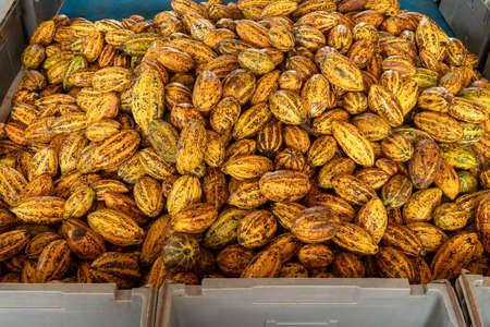 Fèves de cacao et cabosse de cacao sur une surface en bois