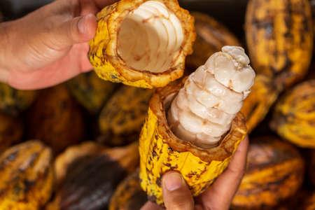 Cocoa beans and cocoa pod Reklamní fotografie - 117178131