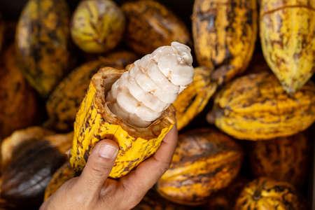 Cocoa beans and cocoa pod Reklamní fotografie - 117178707